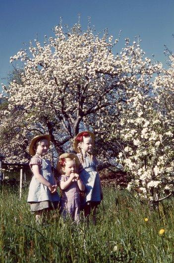 Au pied du cerisier