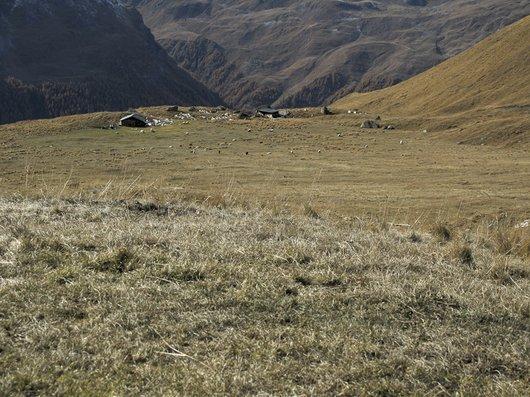 Alpage de Béplan (La Sage / Villa)