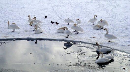Lac de Joux - Point d'eau