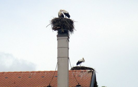 Les cigognes