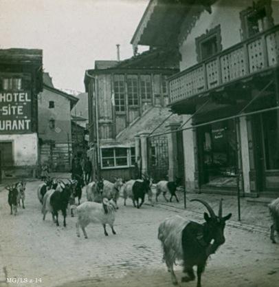 Le défilé des chèvres