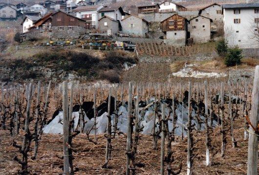 Ardoises dans les vignes de Branson