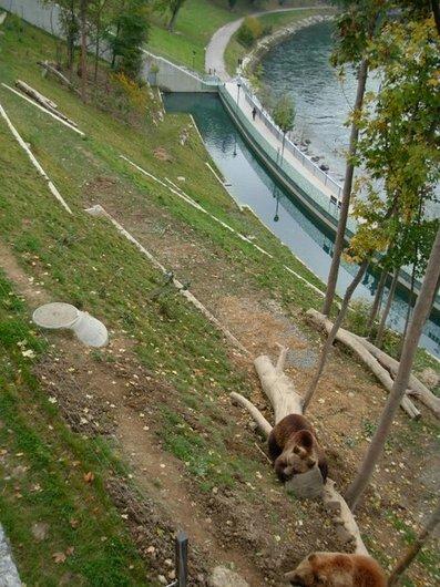 Ville de Berne, la fosse aux ours