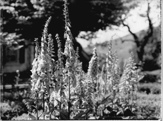 Jardin de la famille de Victor Desarzens, Monique Jacot photographe