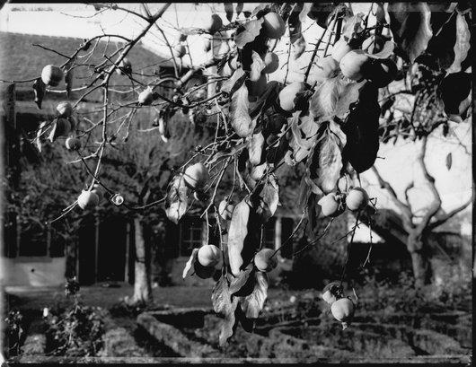 Jardin familiale de Victor Desarzens à Aran