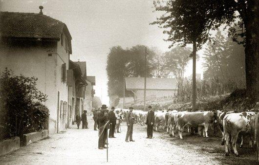 Le marché aux bestiaux, Gd-Saconnex