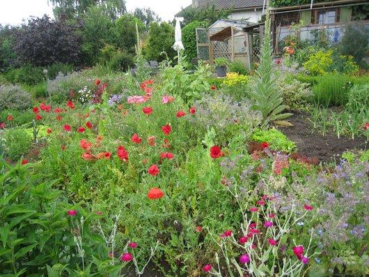 Jardin que j'aime.....