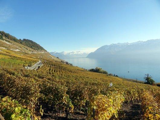 Chemin des vignes en Lavaux