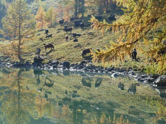 Derborence, reflets dans son lac