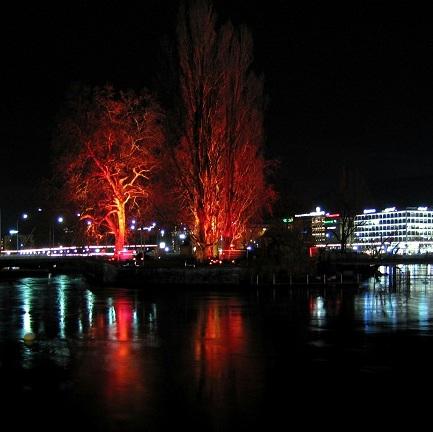 Arbres en lumière 2007