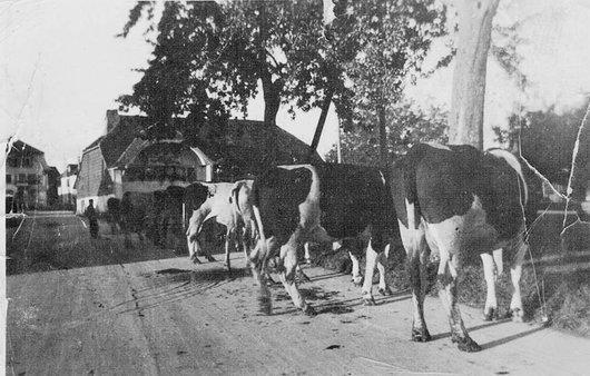 Lentigny,syndicat de la Fédération suisse d'élevage Holstein