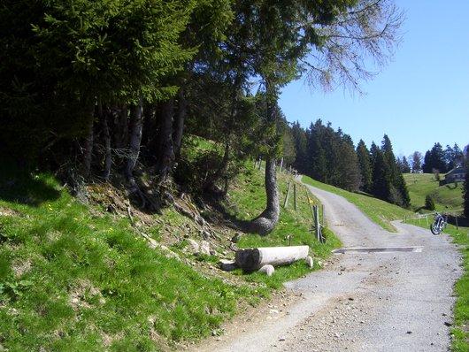 La Planniaz-rte forestière de Chessy4