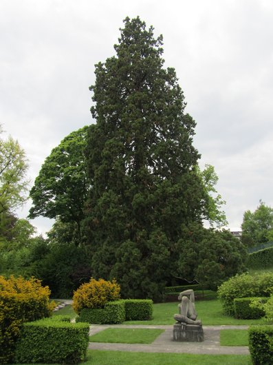 Mon Repos Lausanne Séquoia géant