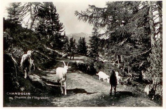 Chandolin, sur le chemin de l'Illgraben