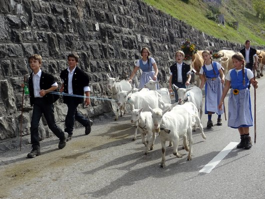 Désalpe à l'Etivaz - Le passage des chèvres