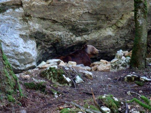 """""""Le dernier ours du Val-de-Travers"""""""