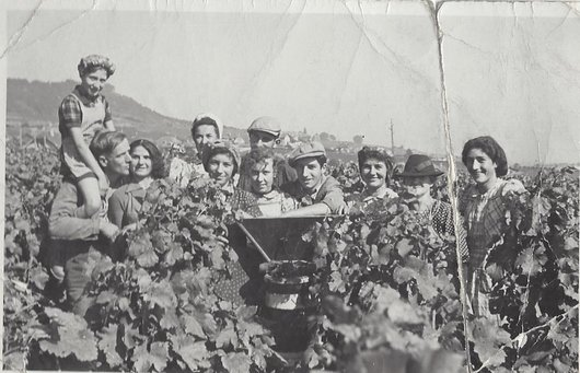 Vendanges 1945 Germagny