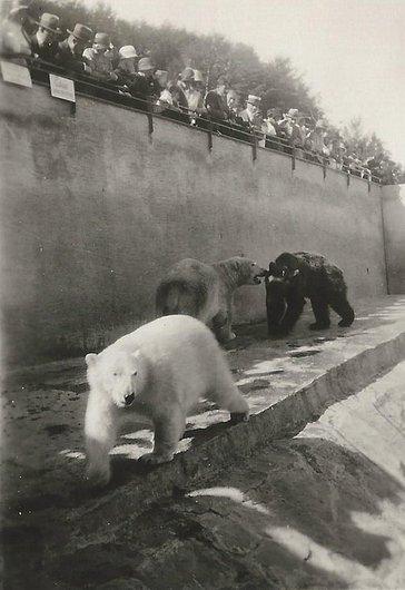 Les ours du zoo de Zürich