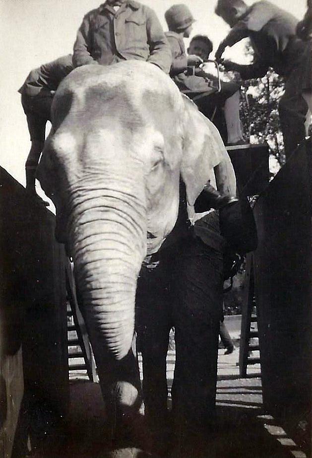 A dos d'éléphant - Zoo de Zürich
