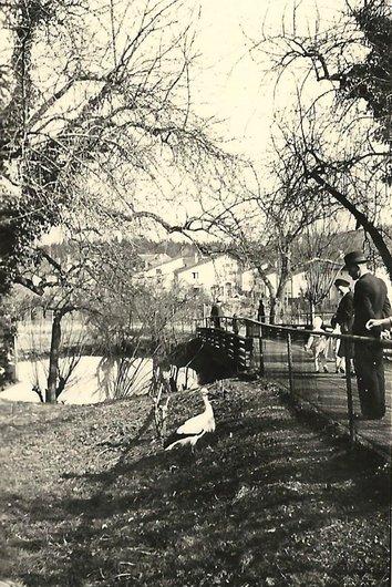 Cigogne au jardin zoologique de Zürich