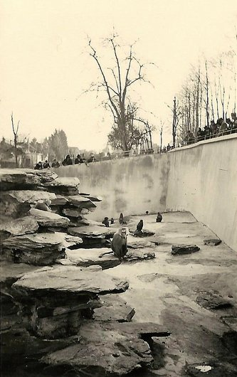 Les singes du jardin zoologique de Zurich