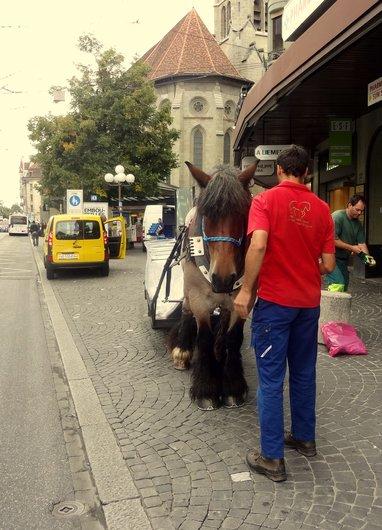 Cheval urbain