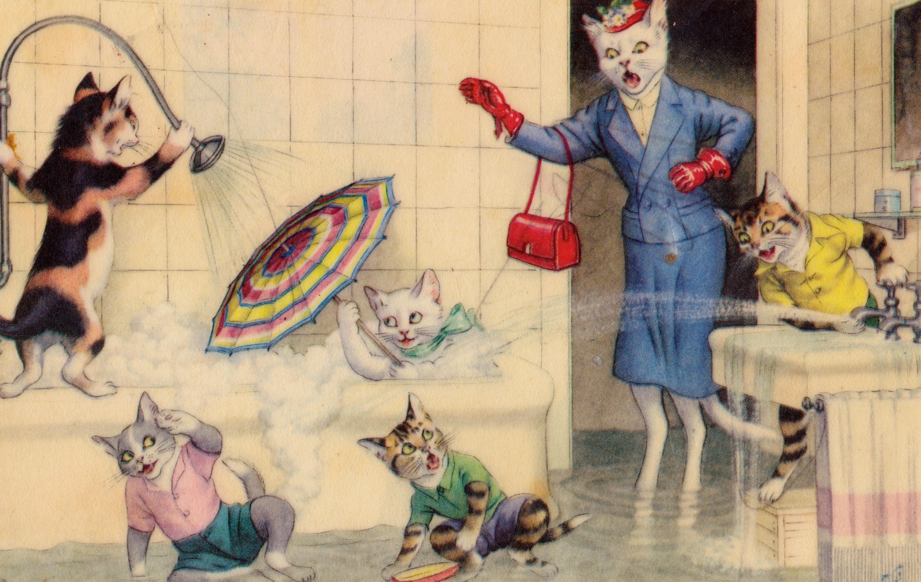 Chats carte le bain