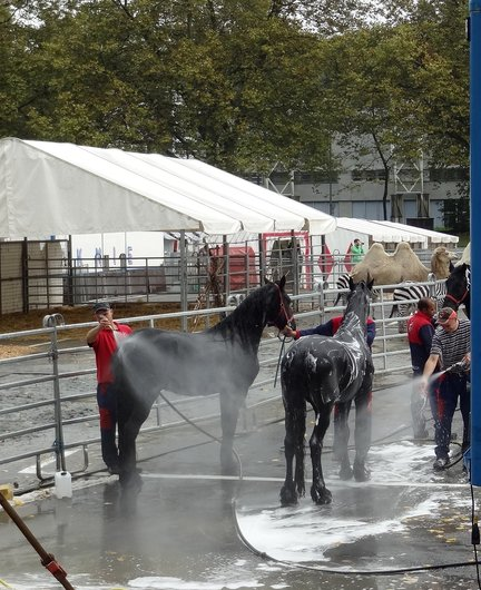 Cirque Knie - Soins aux chevaux