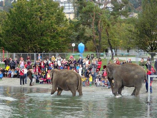 Cirque Knie - Le bain des éléphants
