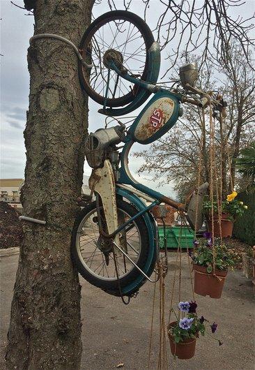 Le vélomoteur sur l'arbre