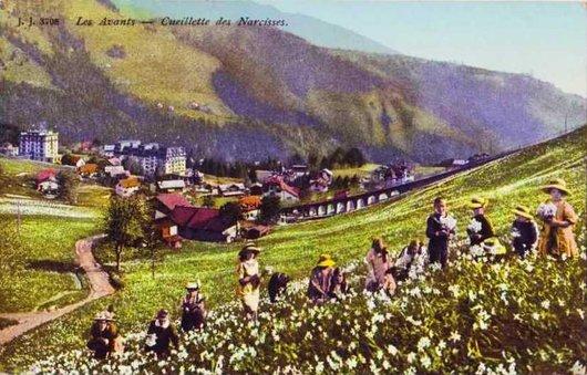 Montreux les narcisses