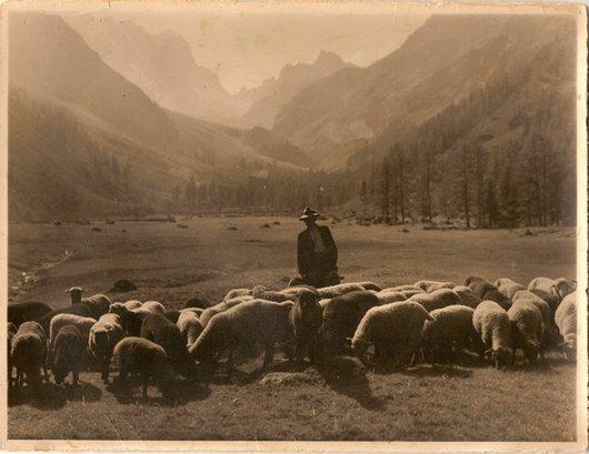 Val d'Arpette moutons