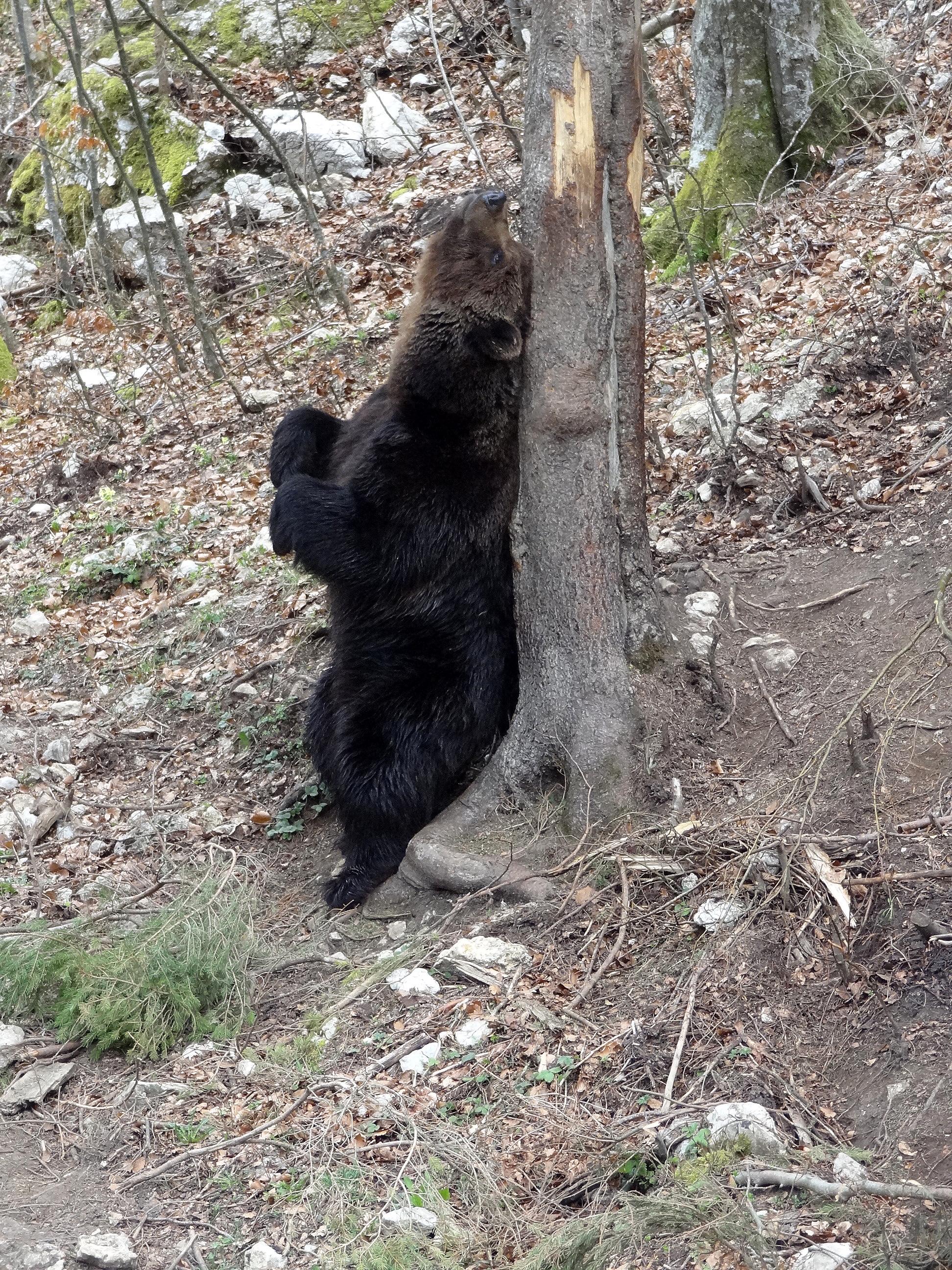 L'ours au printemps