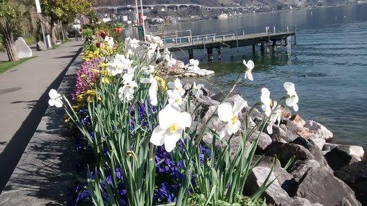 Après 58 d'absence ! La Fête des Narcisses 2015 aura lieu les 28 et 30 mai 2015 !