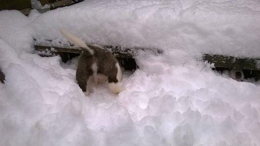Un instinct de sauvetage en neige certain