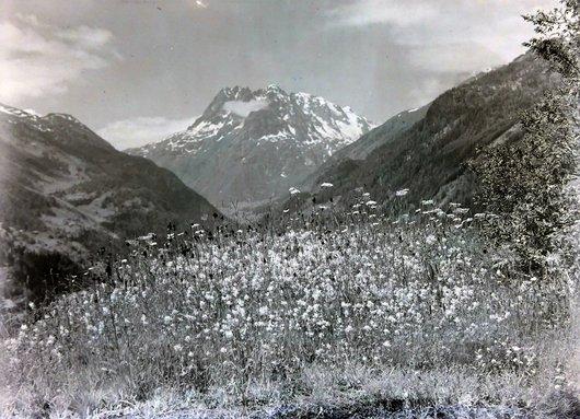 Pré fleuri au mois de juin Finhaut, canton du Valais