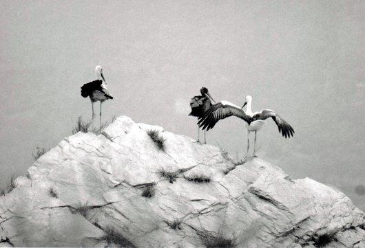Trois cigognes qui font écho aux 3 aigles de Granges !