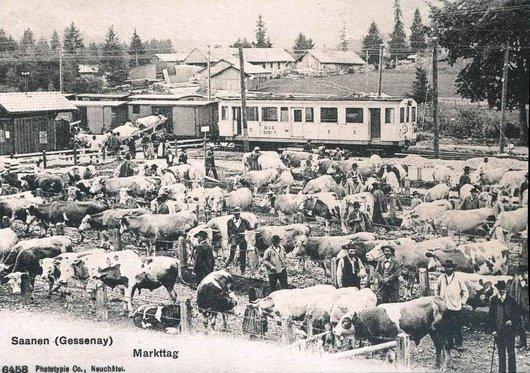 MOB Saanen 1904
