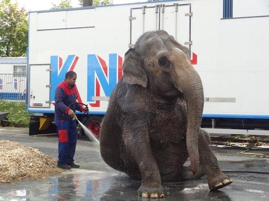 Lausanne - La douche de l'éléphant