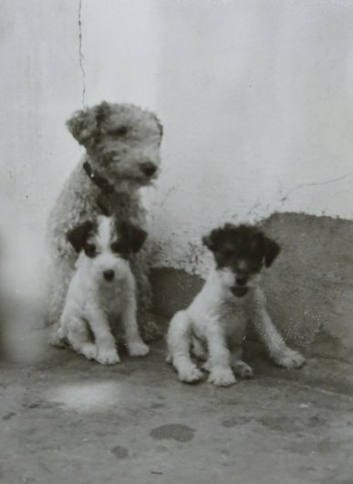 Les chiens de Rapperswil 1951