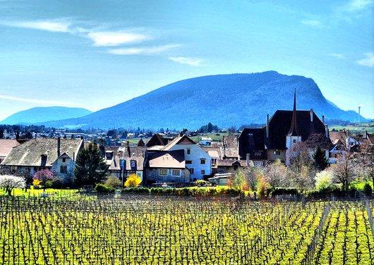 Un vue du village d'Auvernier