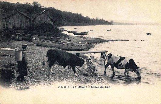 La Belotte 1901