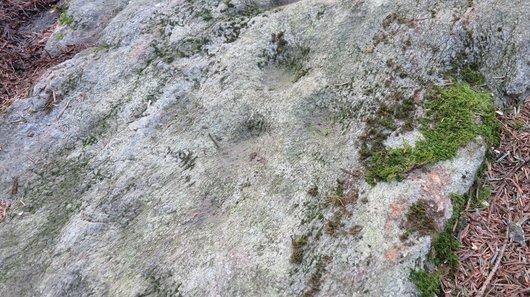 Pierre à Ecuelles de Burtigny - 1261.B.03 015