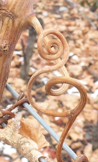 Clé de Sol dans les vignes