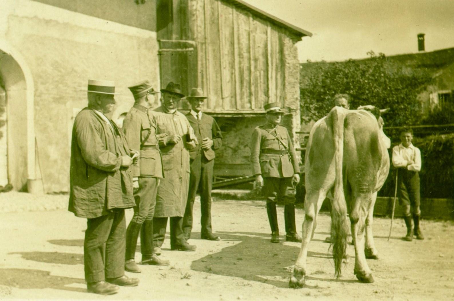 Achat de bétail, pour l'armée Suisse, 1935