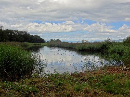 La lagune - Site marécageux des Grangettes