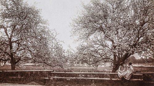 Moudon, le printemps dans le verger...