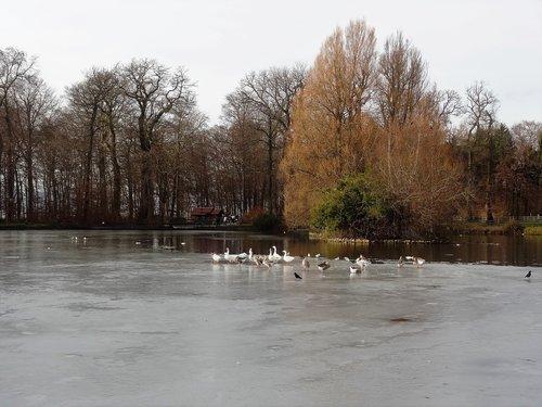 Lac de Sauvabelin avant et après renaturation