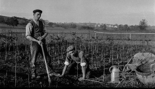 Bremblens, plantation de foyards