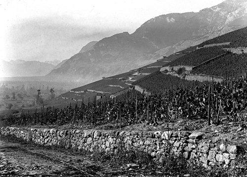 Vignoble de Champmarais et Ardon